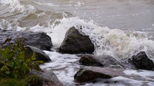 Vågor vid stranden.