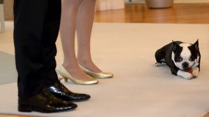 Presidentparets hund äter ett ben