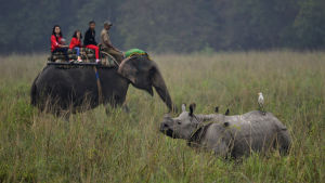 Tourists ride on elephants as they go on the first trip of the tourist season at the Pobitora Wildlife Sanctuary, about 50 km from Guwahati city, India, 02 November 2013. The Assam Forest Department has reopened Pobitora Wildlife Sanctuary for tourists fr