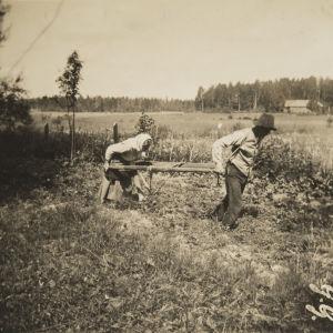 Käsisahralla kynnetään Porvoon Pitäjän Eriksdalissa 1917. Kuva: Gösta Grotenfelt. Kansatieteen kuvakokoelma, Museovirasto. (KK1178:49)
