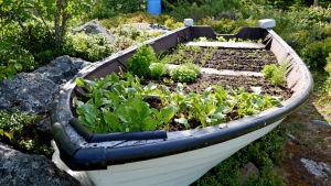 Trädgårdsbåt.