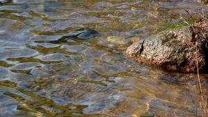 Närbild på vattnet i Littois träsk efter den kemiska reningen. Man ser ända ner till bottnen.