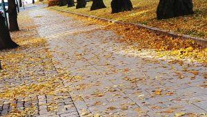 en höstlövs beklädd gata i esplanadparken