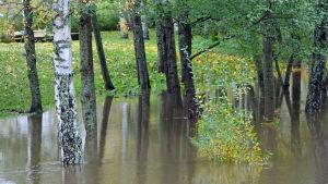Översvämning vid Esbo å.