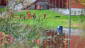 Översvämning vid Esbo å, en soptunna under vatten.