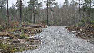 En bred väg av grus i skogen.