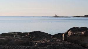 Utsikt över södra Bottenhavet, Nystads skärgård, april 2020. Sjöfåglar, sannolikt ejdrar, simmar förbi.