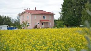 Det nybyggda huset framför ett gult rypsfält.