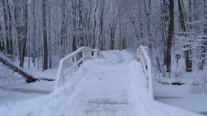 ramsholmen på vintern
