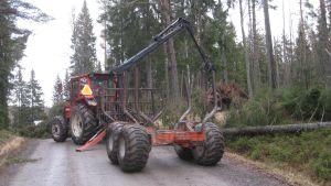 Träd som fallit i stormen Dagmar tas bort i Manngård.