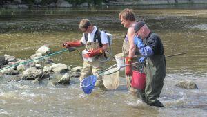 Fiskbeståndet i Strömsberg kollas
