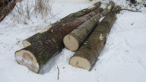 skogsavverkning i ingå