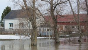 översvämning i Hommansby