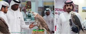 Haukkoja esillä Dohan haukkamessuilla.