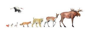 Vilda tecknade djur.