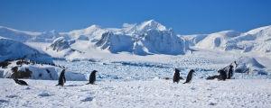 Pingviner på Sydpolen, isberg, snö.
