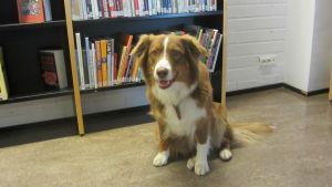 Martta på biblioteket