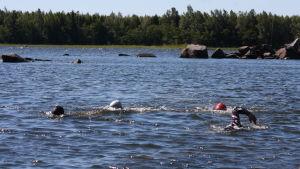 Öppet vatten simning i Maxmo för Mitt triathlon gänget