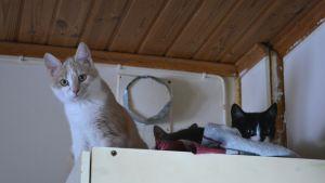 tre katter på garderobstak