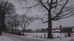 Träd vid Ladugårdsgatan i Ekenäs.