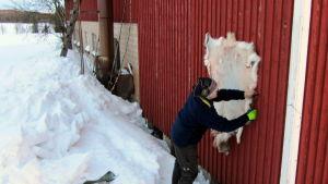 Poromies Juha Virkkunen naulaa poronnahkaa kuivumaan pohjoisen puoleiselle seinälle.