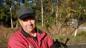 Leif Blomqvist säljer havtornsbuskar i Lepplax