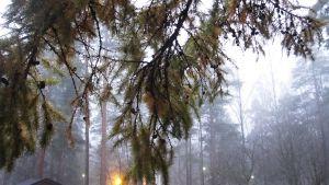 puiden oksat sumua vasten