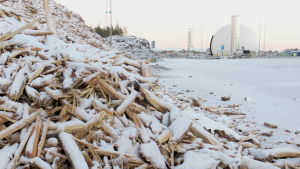 Kompostoitavat biojätteen päällä puuhaketta Ämmässuolla