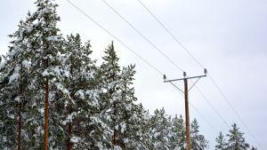 Elledning och snötäckta träd.