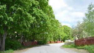 träd och väg