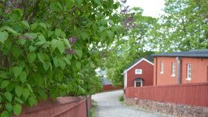 träd och staket