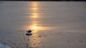 Vintersol över istäcke.