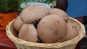Portobello svampar i en korg.