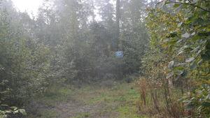 En parkering vid Svenvikens småbåtshamn i Ingå som har fått växa igen med sly.