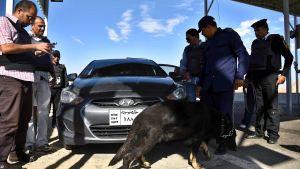 Säkerheten har skärpts bl.a med vägspärrar över hela Sinai sedan lokala extremister svor trohet till IS för drygt två år sedan