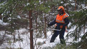 Bengt Karlsson röjer skog på Emsalö i Borgå 13.01.17