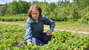 Elisif Vennelä i sitt jordgubbsland
