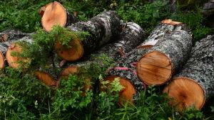 På området som är 5 hektar stort har fällt en hel del träd.