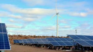 Långa rader med solpaneler och två vindmöllor.