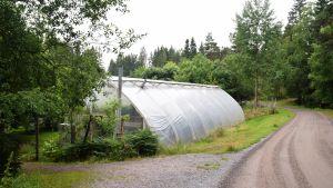 Växthus vid en liten sandväg. Växthuset har ett runt tak och vädringsluckorna är öppna.