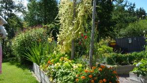 En blombänk fylld med nyttoväxter och blommor.