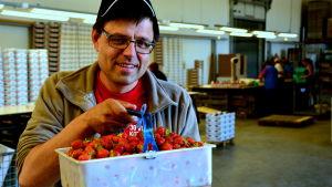 Anders Lång med en korg jordgubbar