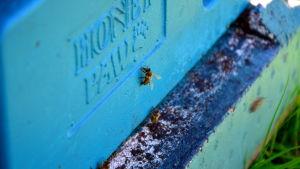 Ett bi.