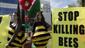 Greenpeacemedlemmar demonstrerar mot bekämpningsmedel som dödar bin