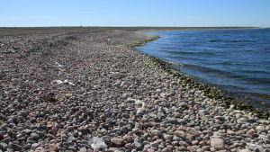 Plast är ödesdiger för alla levande organismer. På Jurmo ordnas plastinsamlingstalko.