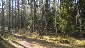 En del av det skogsområde Hangö vill gallra i Hangö norra. Bilden tagen västerut från Långbodavägen.