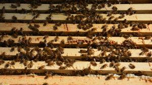 Biodling med bin.