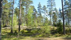 Raasepori Resort ska byggas upp vid Kvarnträsket, några km säder om Karis centrum.