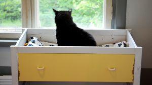 Siiri behöver ett hem - katt i katthuset.