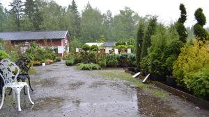 Åskoväder över Blomqvists trädgård i Lepplax